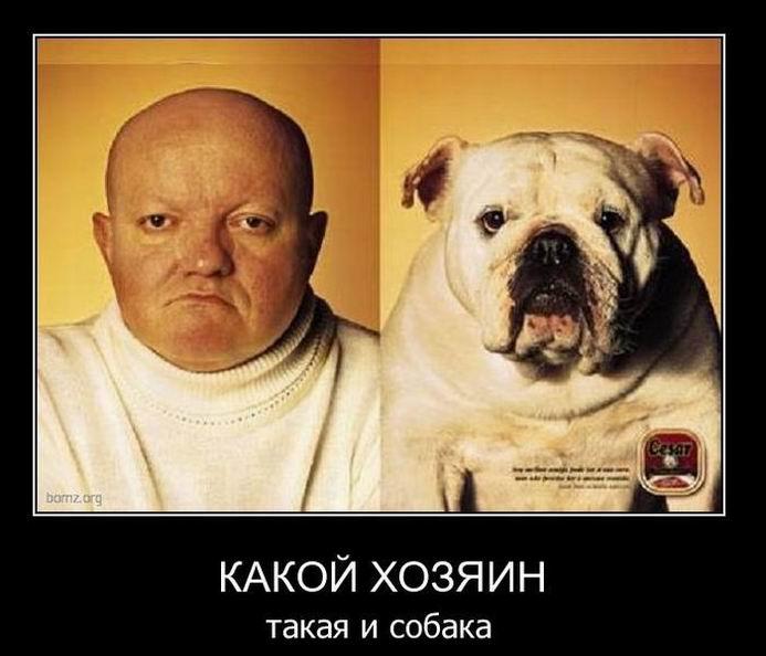 Какой хозяин такая и собака