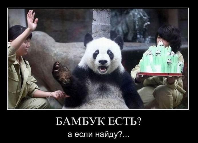 Бамбук есть? А если найду?...