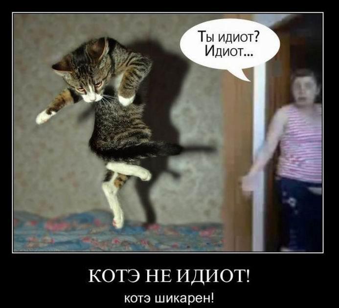 Котэ не идиот! Котэ шикарен!