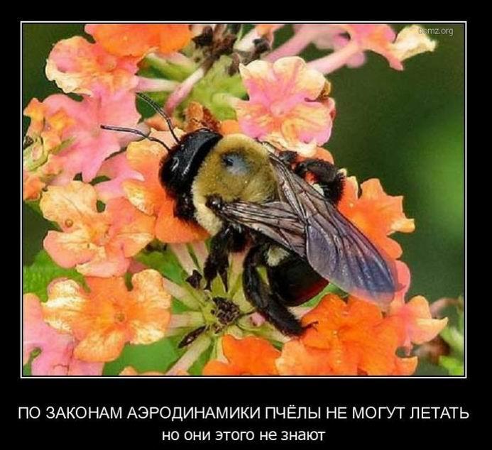 Пчёлы не могут летать