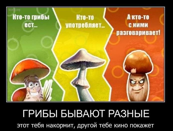 Кто-то грибы ест
