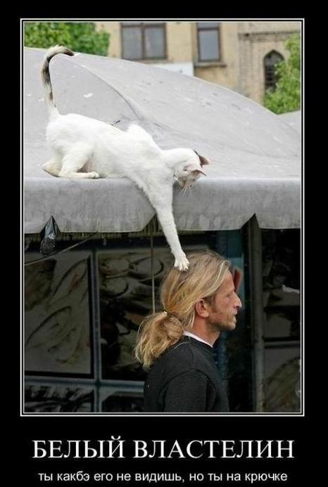 Белый властелин