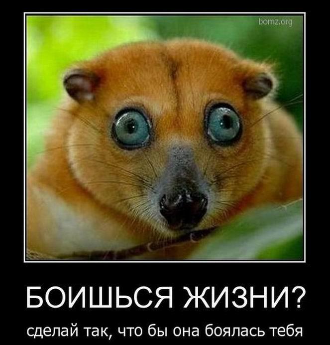 Боишься жизни?