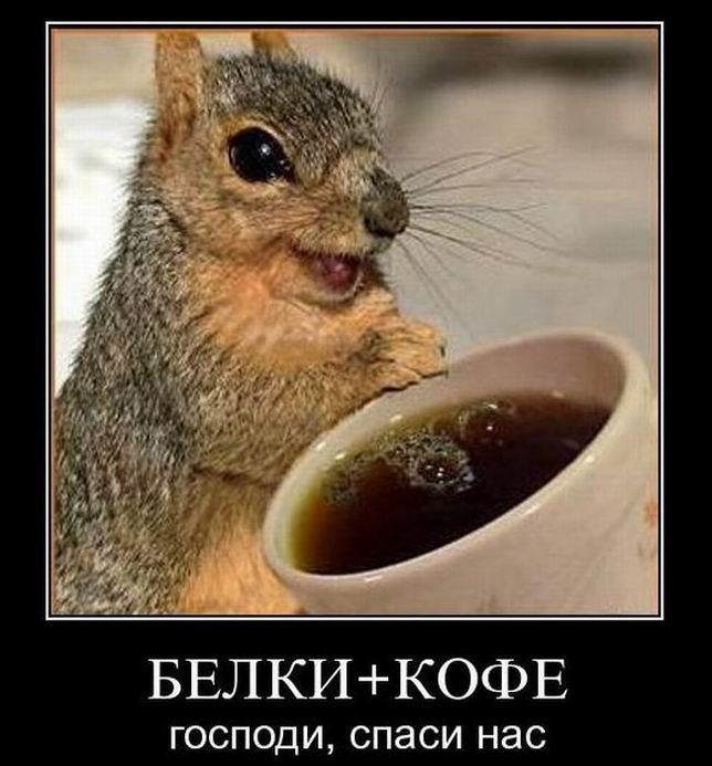 Белки+кофе. Господи, спаси нас
