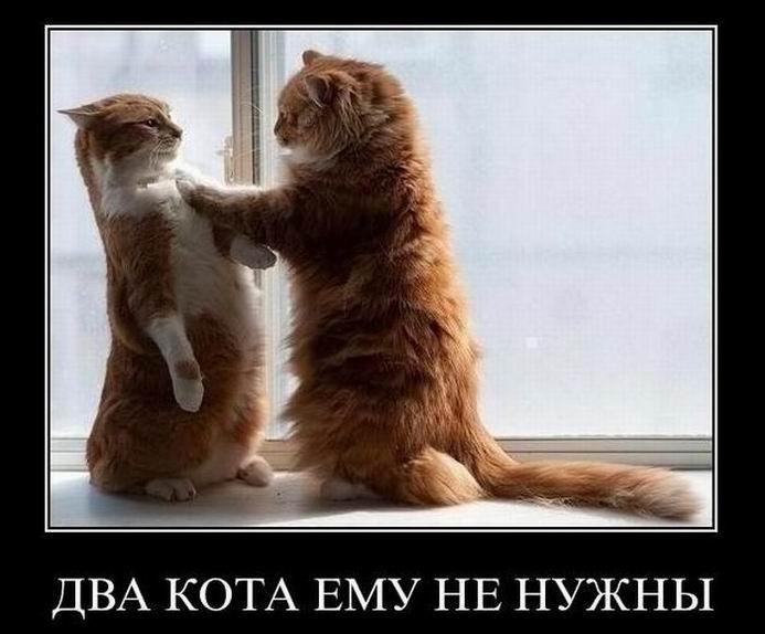 Два кота ему не нужны