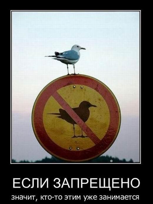 Если запрещено