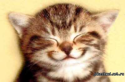 Кошачьи смайлики - Позитив