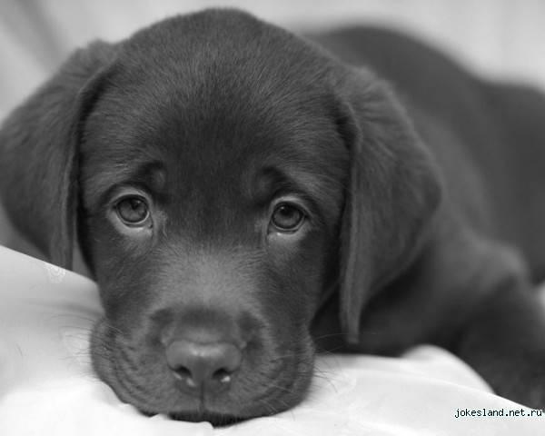 http://www.tuton.ru/p/dogs/1195769598_02.jpg