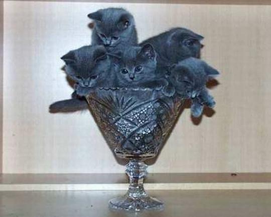 Букет котов!