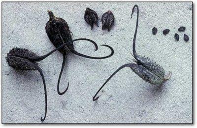 Самые жуткие растения планеты Земля (53 фото), photo:14