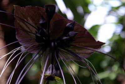 Самые жуткие растения планеты Земля (53 фото), photo:19