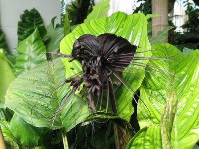 Самые жуткие растения планеты Земля (53 фото), photo:21