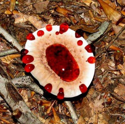 Самые жуткие растения планеты Земля (53 фото), photo:4