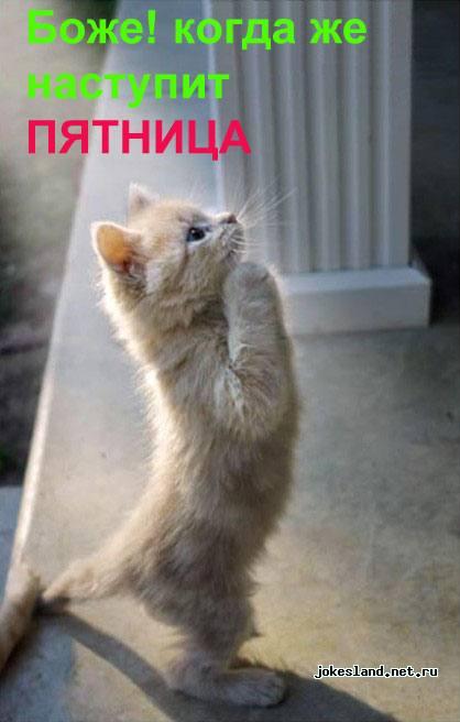 История рыжего кота (креативчик про работу)
